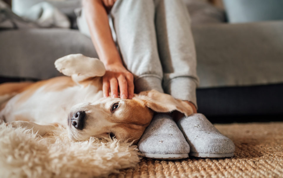 Woman petting her dog while wearing slippers.