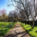 Enjoy The Fresh Air At The Pitt County Arboretum